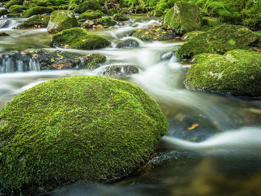Green Photograph - Green River by Toby Luxberg
