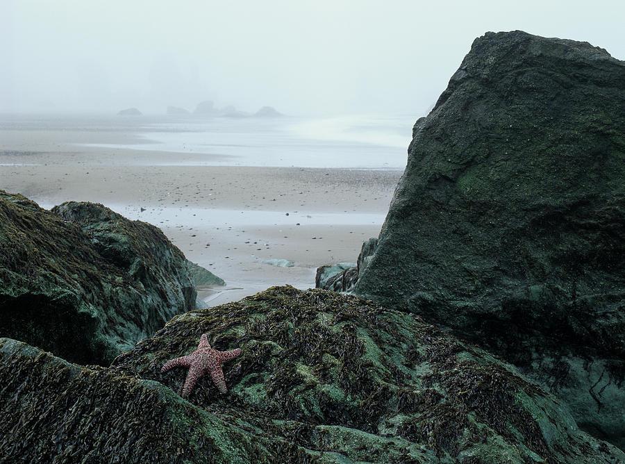 Green Rocks by Robert Potts