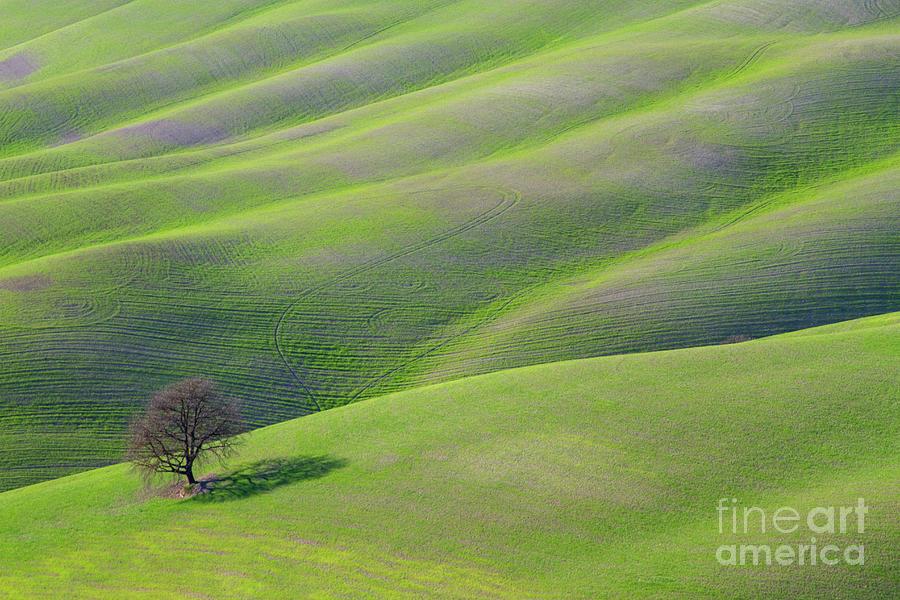 Green Rolling Grassland by Heiko Koehrer-Wagner
