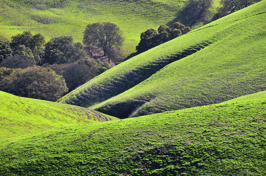 Green Rolling Hills Of Central Photograph by Mitch Diamond