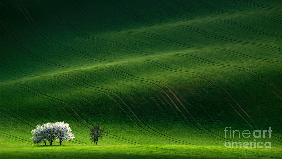 Rural Photograph - Green Rolling Spring Landscape With by Vlad Sokolovsky