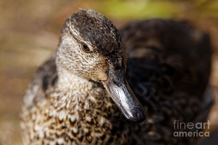 Green Teal Duck by Sue Harper