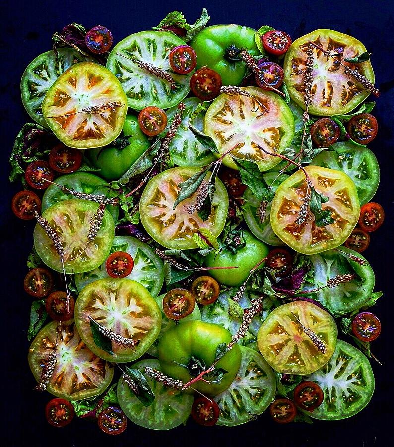 Green Tomatoes  by Sarah Phillips
