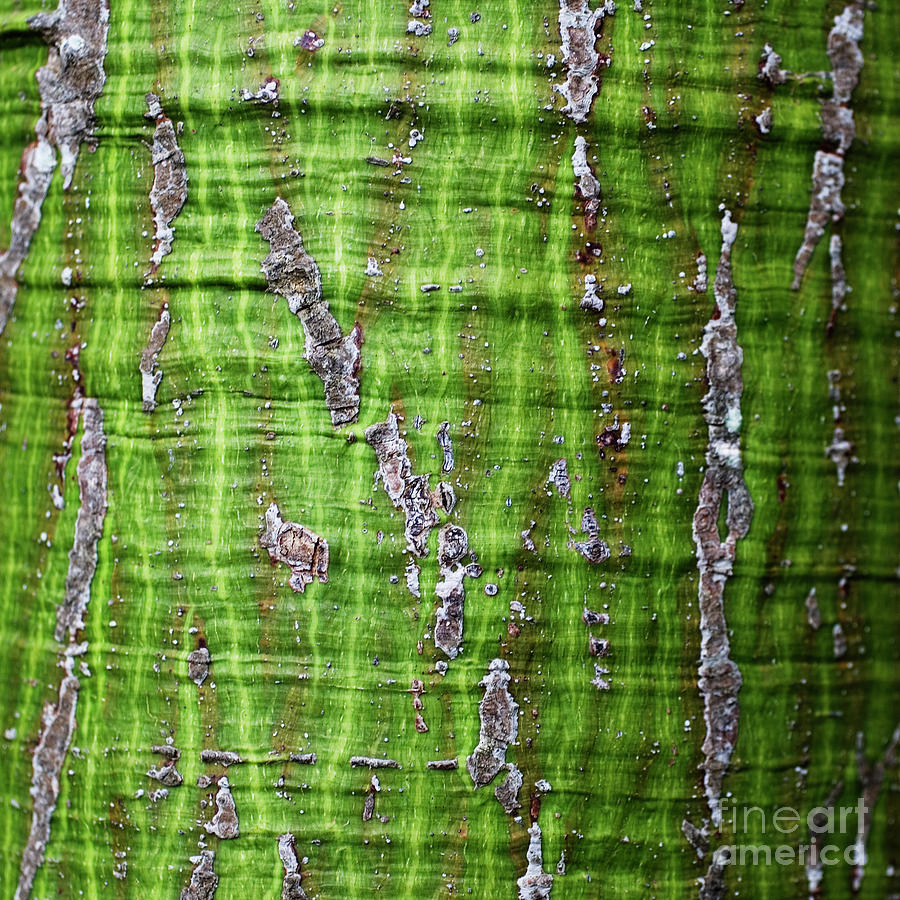 Green Tree Trunk Surface - Organic Patterns and Textures by Charmian Vistaunet