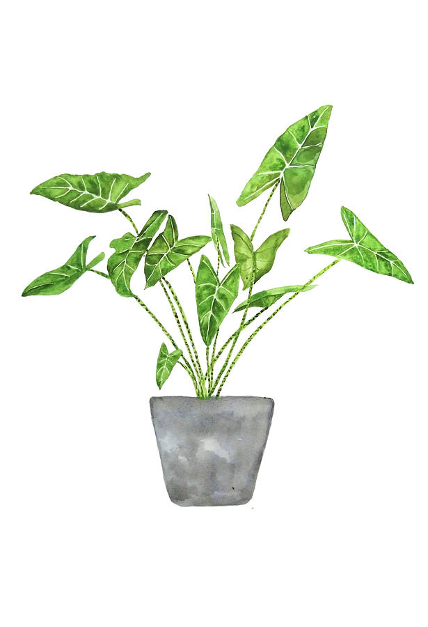 green tropical plant in pot by Color Color