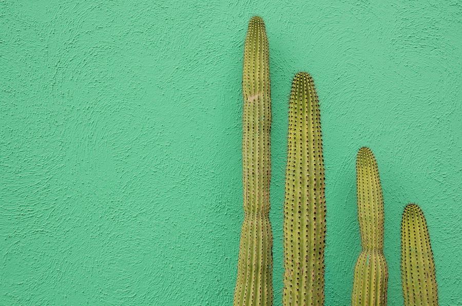 Green Wall And Cactus Photograph by Joanna Mccarthy