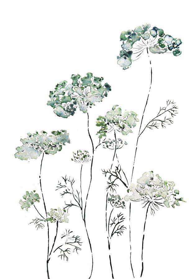 green wild carrot queen ann's lace by Color Color