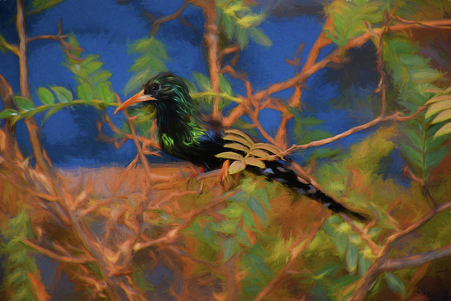 Green Woodhoopoe 81819 Mixed Media