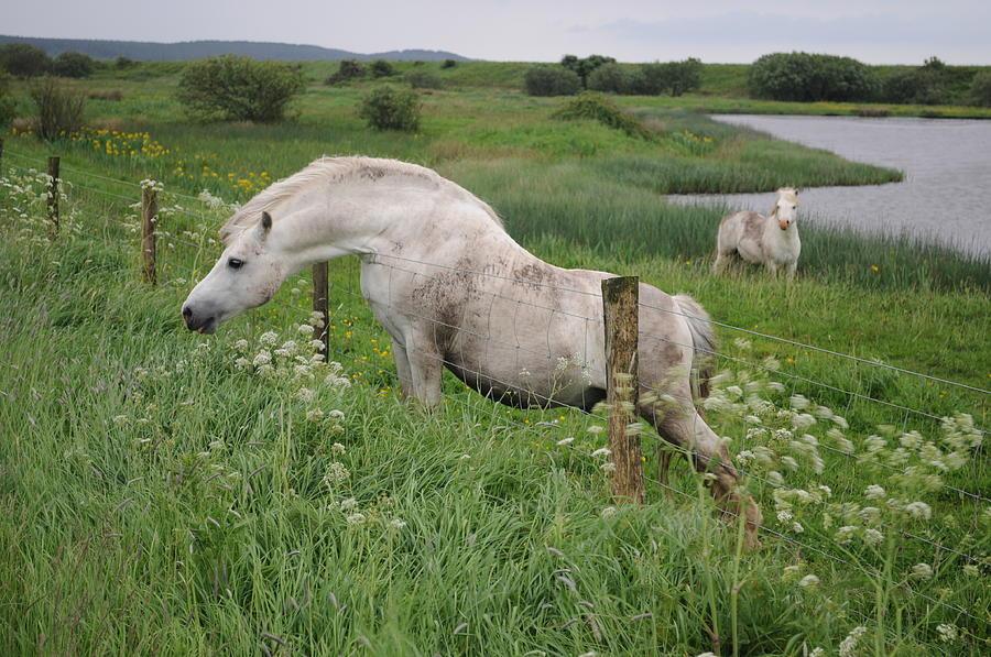 Greener Grass by Jack Harries