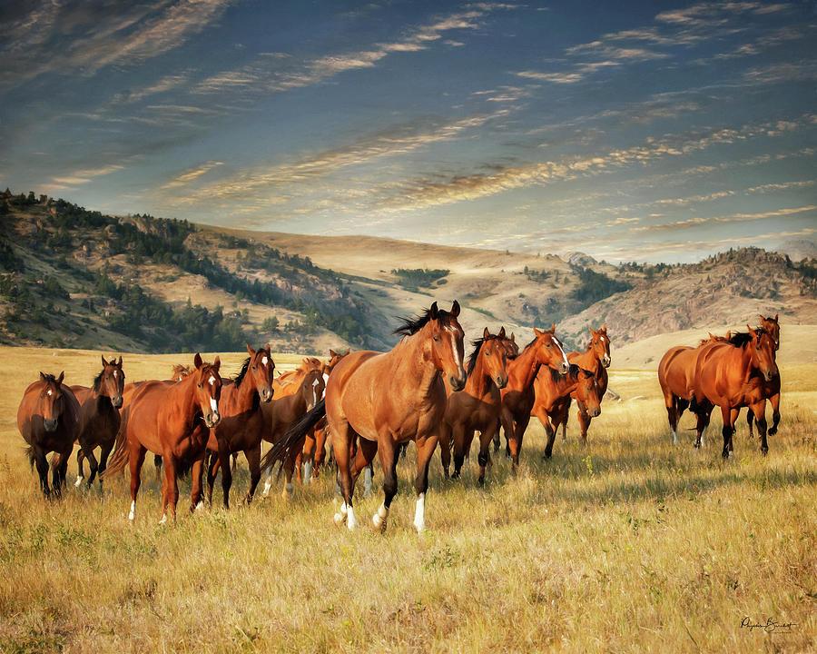 Greener Pastures by Phyllis Burchett