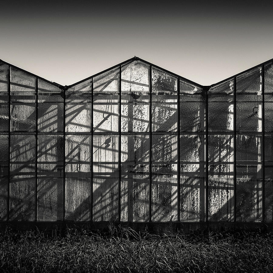 Greenhouse Shadows Photograph