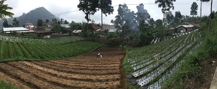 Greetings from Indonesia by Michel Verhoef