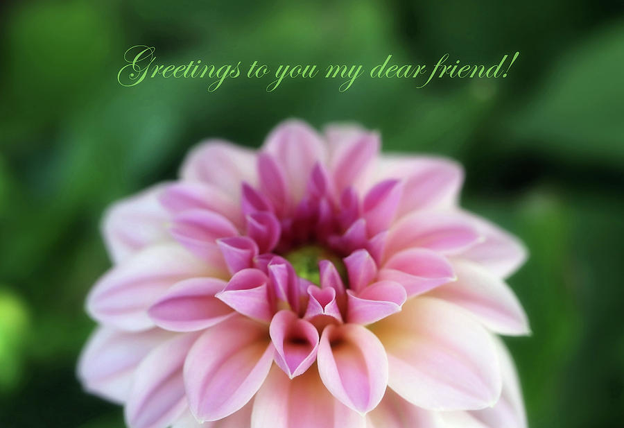 Greetings To You My Dear Friend by Johanna Hurmerinta
