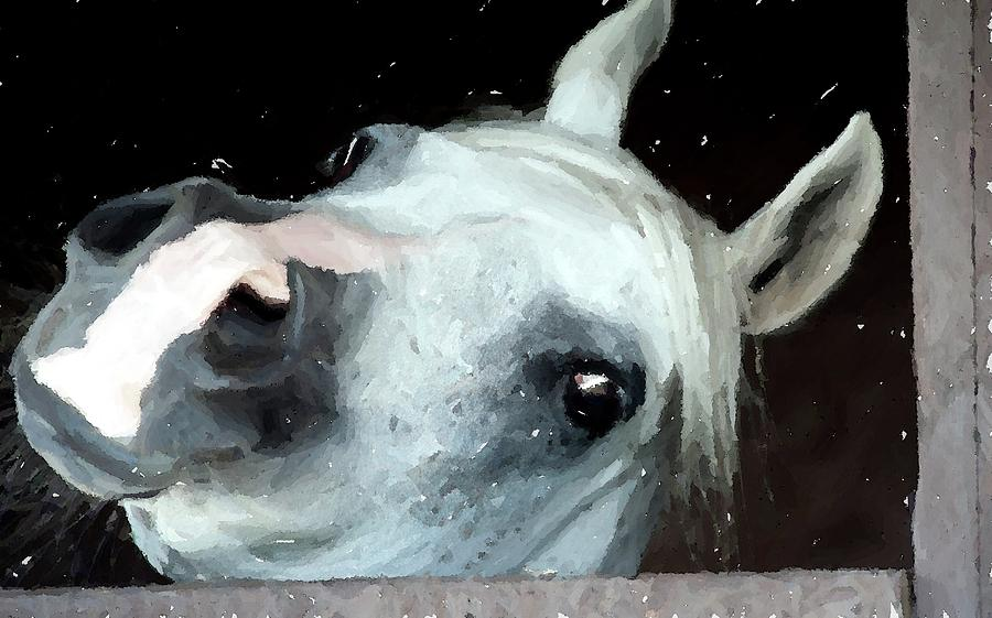 Grey Arabian Horse Portrait in Watercolor Portrait by Olde Time Mercantile