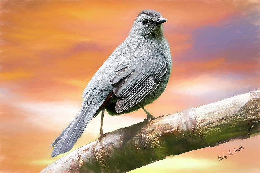 Grey Catbird art portrait by Rusty R Smith