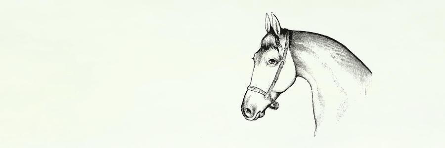 GREY HORSE by Dressage Design