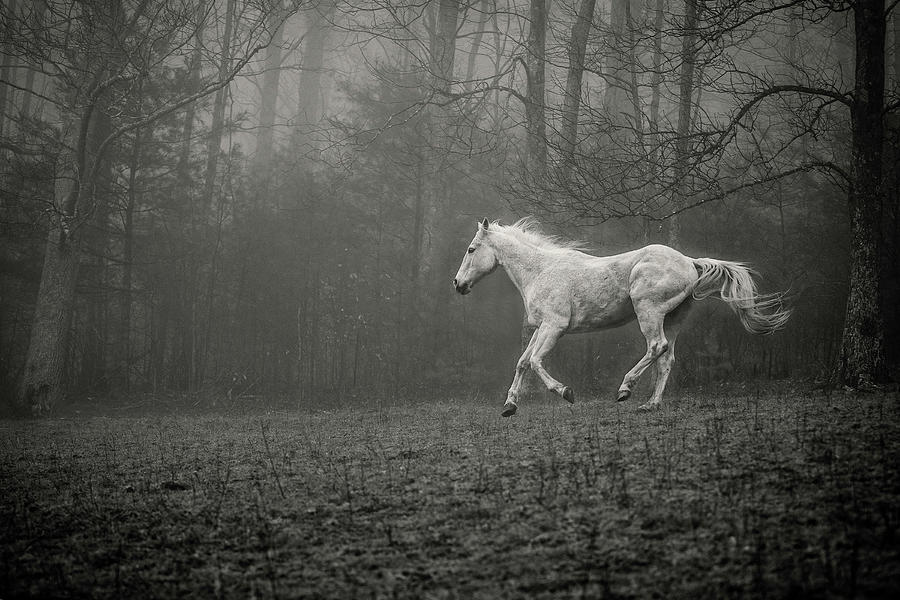 Grey Horse Running in Fog by SL Ernst