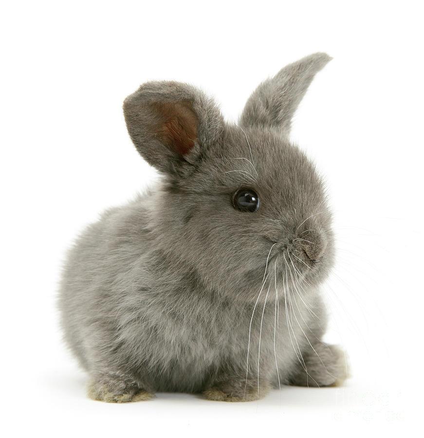 Grey Love Bunny by Warren Photographic