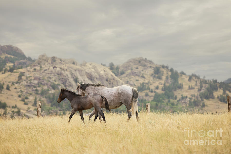 Grey Mare and Foal by Terri Cage