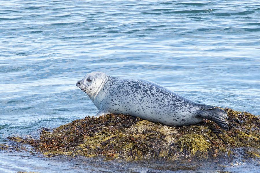 Grey Seal by Jurgen Lorenzen