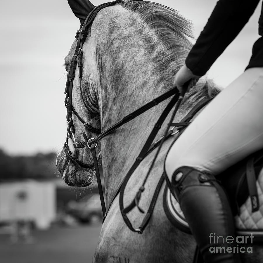 Grey Showjumper in black and white by Michelle Wrighton
