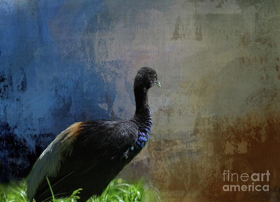 Grey-Winged Trumpeter by Eva Lechner
