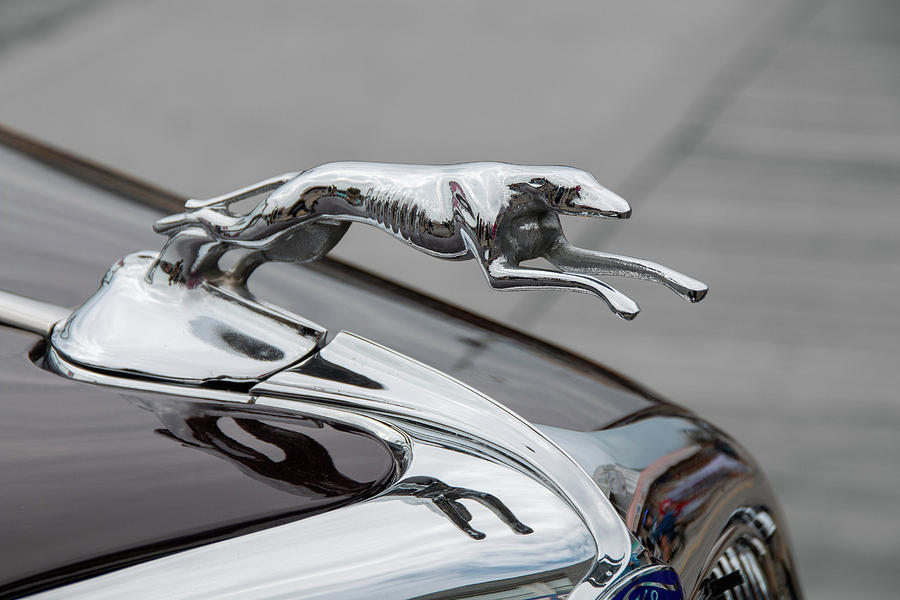 Greyhound Hood Ornament 1 by Kristia Adams