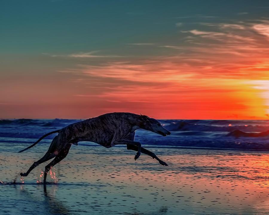 Dog Running on Beach at sunset by Travis Patenaude