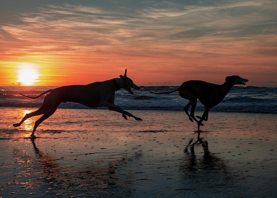 Dogs Running on Scheveningen Beach by Travis Patenaude