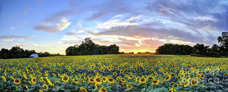 Grinter's Farm Sunset Panorama by Jean Hutchison