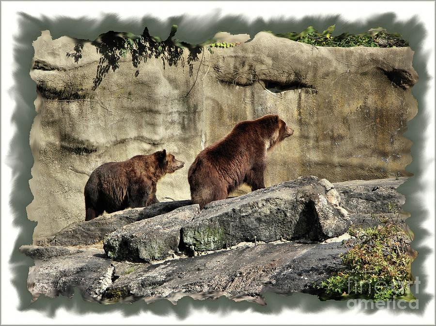 Grizzly and Brown Bear Digital Art by Sandra Huston