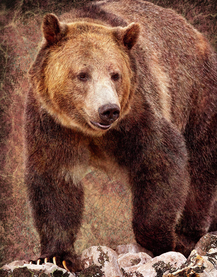 Grizzly by Mary Hone