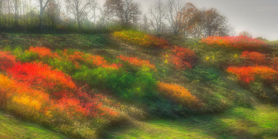 Autumn Photograph - Ground Bouquet No. 3 - Somewhere In Greene County, Pennsylvania - Autumn by Michael Mazaika