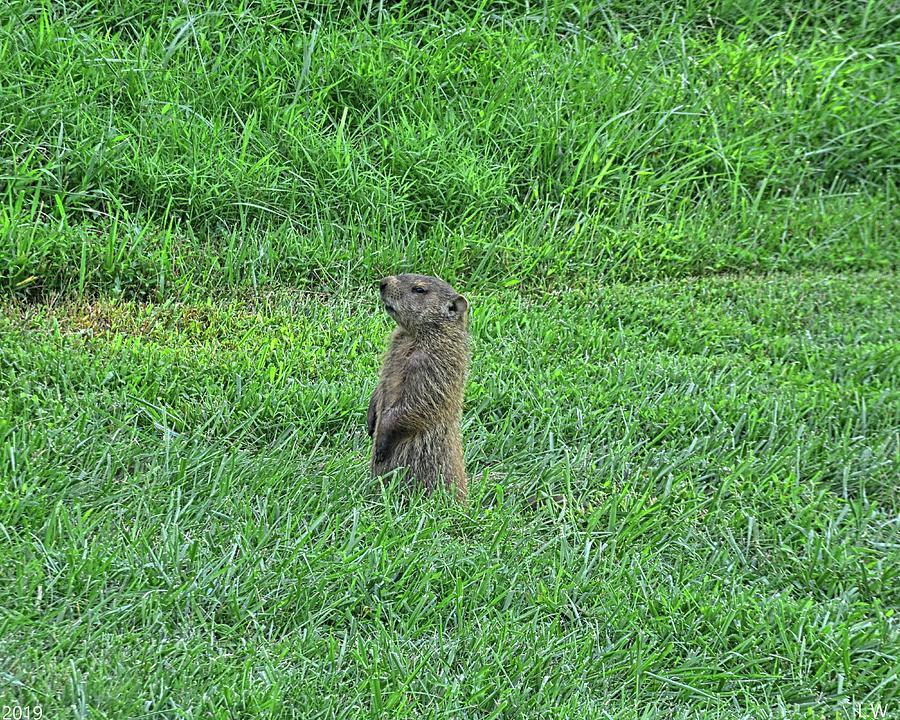 Groundhog by Lisa Wooten