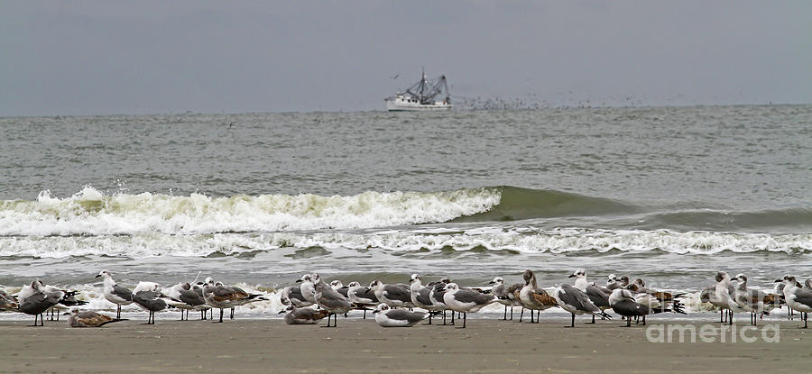 Grounded Seagulls 2 by Kevin McCarthy