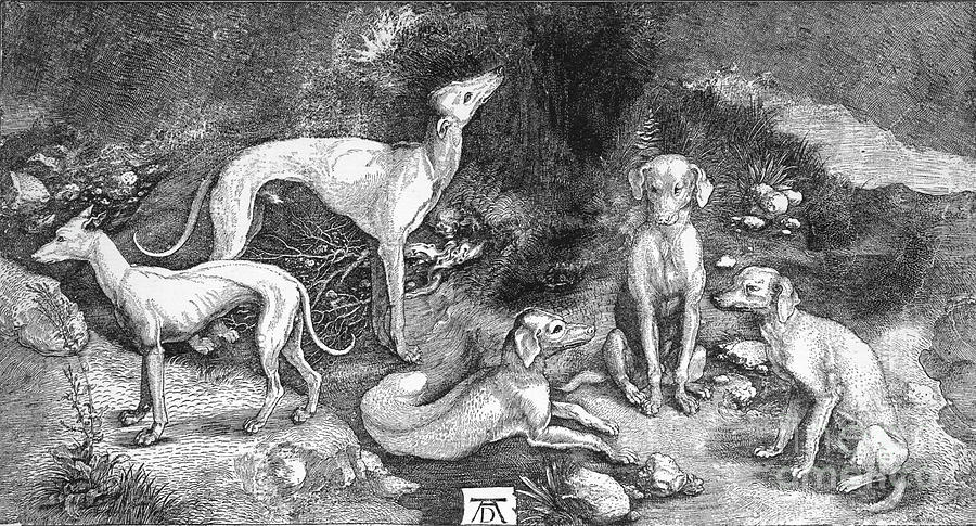 Group Of Dogs. From The Engraving Drawing by Print Collector