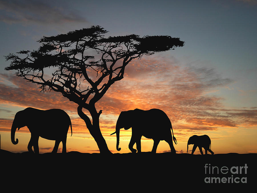 Forest Digital Art - Group Of Elephant In Africa by Tebnad