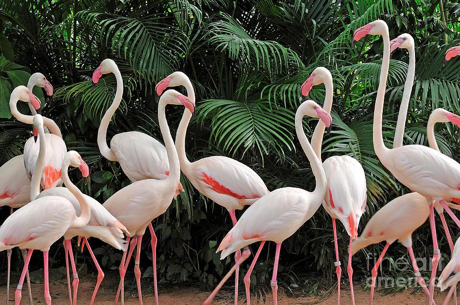 Riverine Photograph - Group Of Pink Flamingos by Panda3800