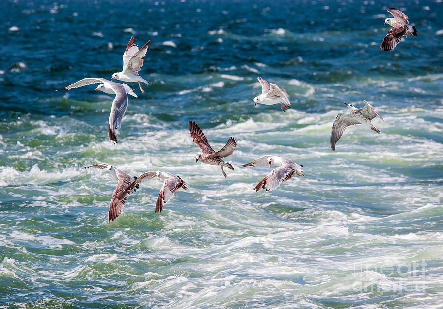 Sea-gull Photograph - Group Of Seagulls Over Sea by Muratart