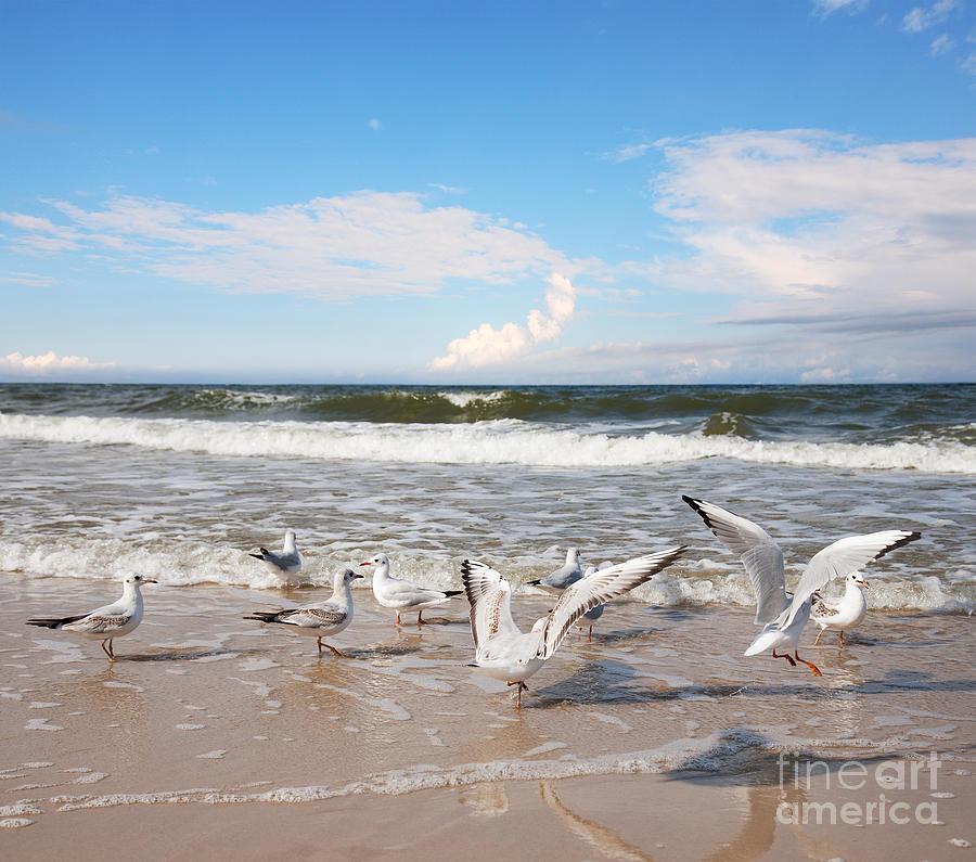 Sea-gull Photograph - Group Of Seagulls Ower Sea by Majeczka