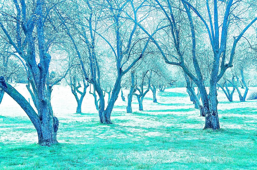 Trees Photograph - Grove 1 by Marty Klar