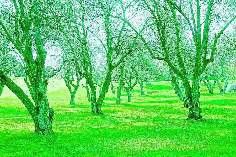 Green Trees Photograph - Grove 3 by Marty Klar