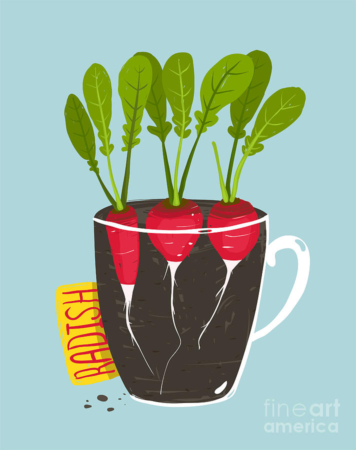 Container Digital Art - Growing Radish With Green Leafy Top In by Popmarleo