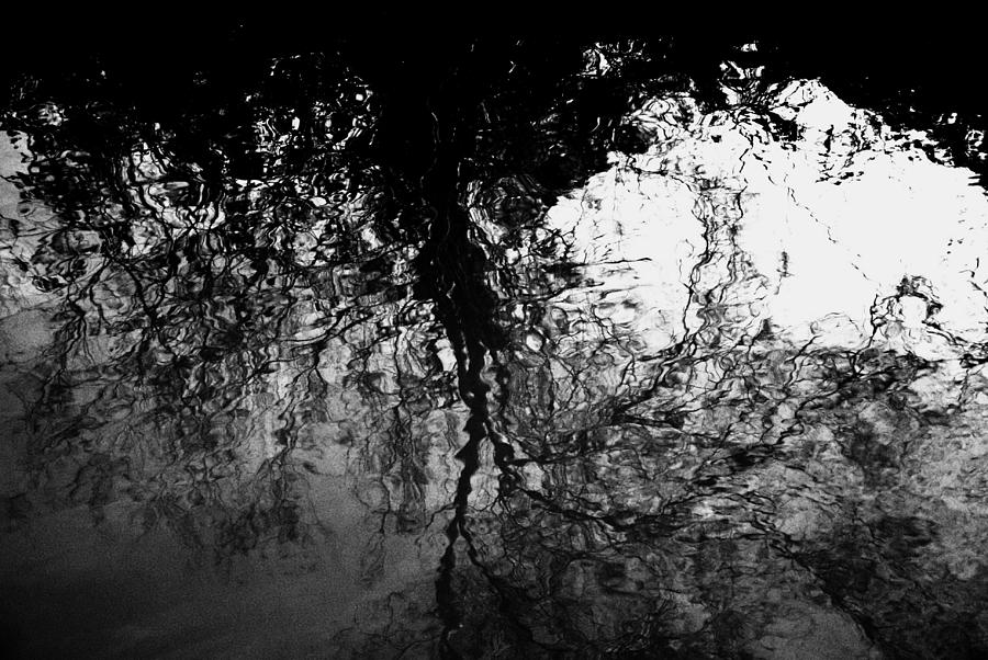 Growth 1 - Venice - Torcello by Jacqueline M Lewis