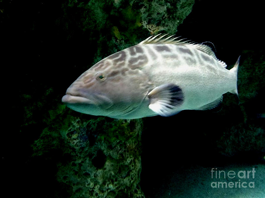 Grumpy Fish by Inscape Art Photography