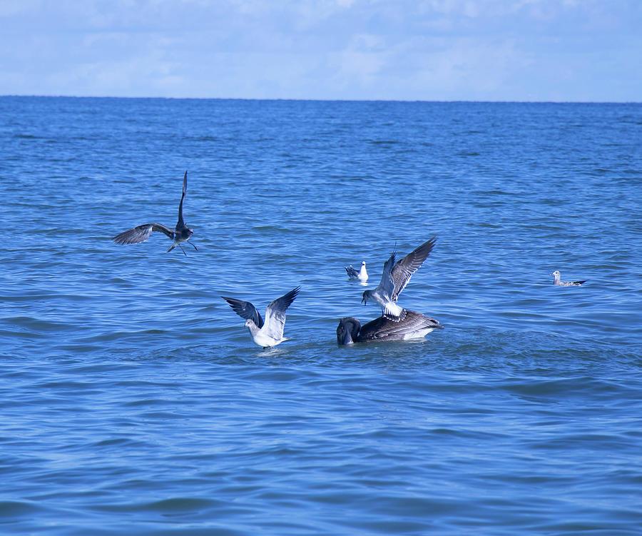 Gulf Feeding Frenzy by Linda Ritlinger