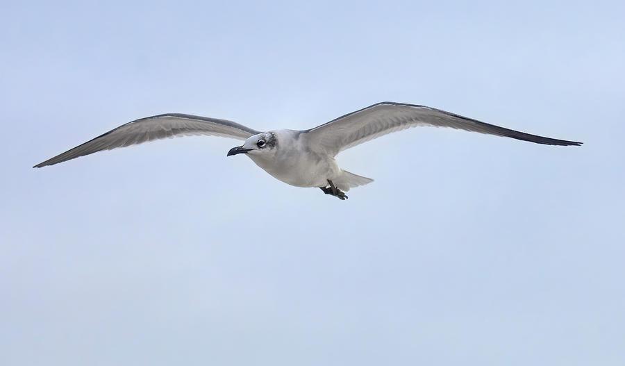 Gull on Patrol by Bill Chambers