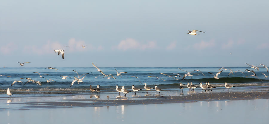 Gulls and Terns on the Beach by Lisa Malecki