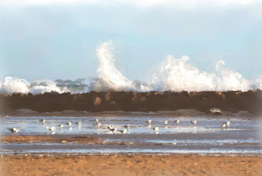 Gulls Digital Art