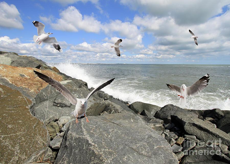 Gulls In Flight by Geoff Crego